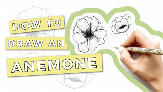 How to Draw an Anemone: Step-by-Step Tutorial
