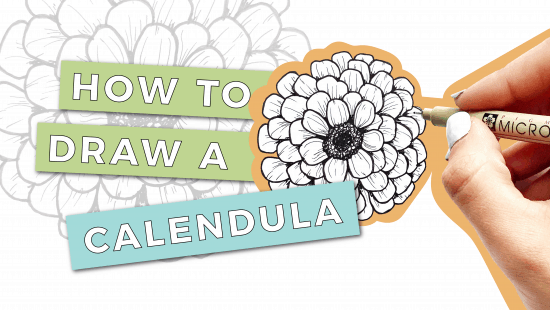 How to Draw a Calendula: Step-by-Step Tutorial